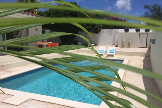 Preview a a sneak peek cover photo behind the plants day villa breeze curacao